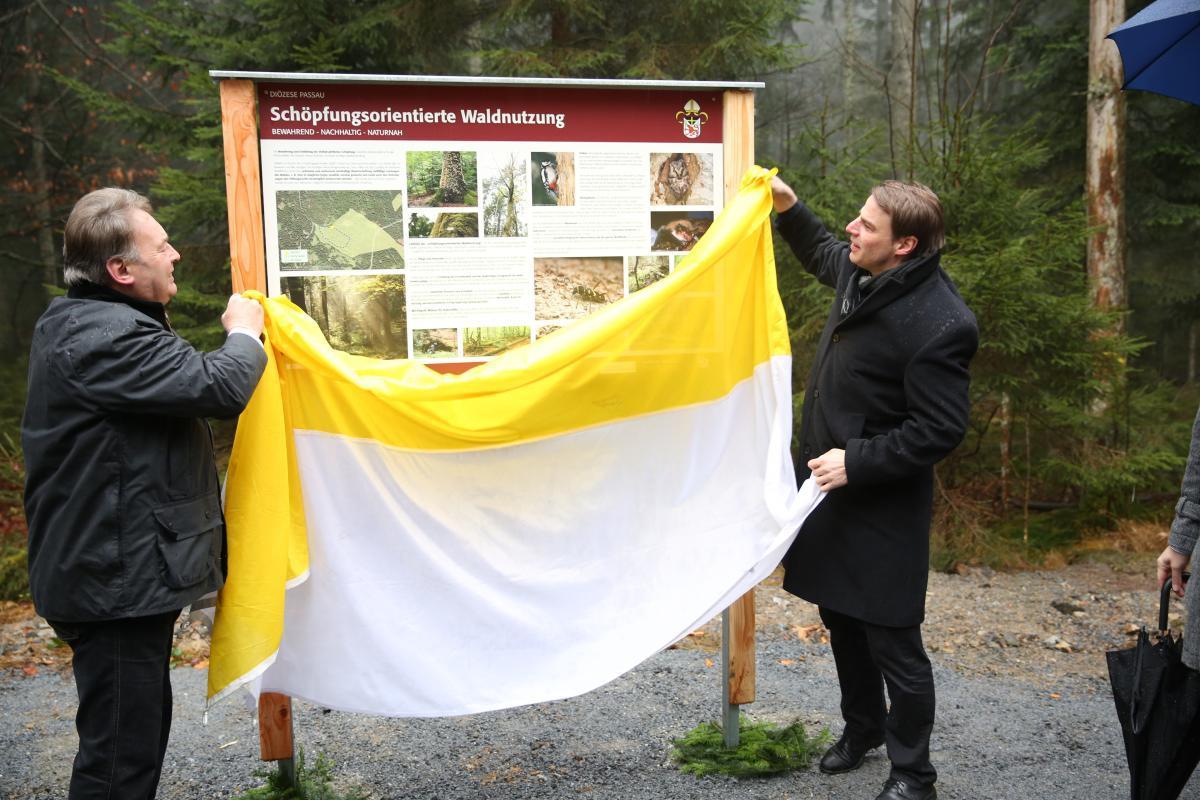 2019 Bistum Pfarreien Umwelt Schöpfungsorientierte Waldnutzung