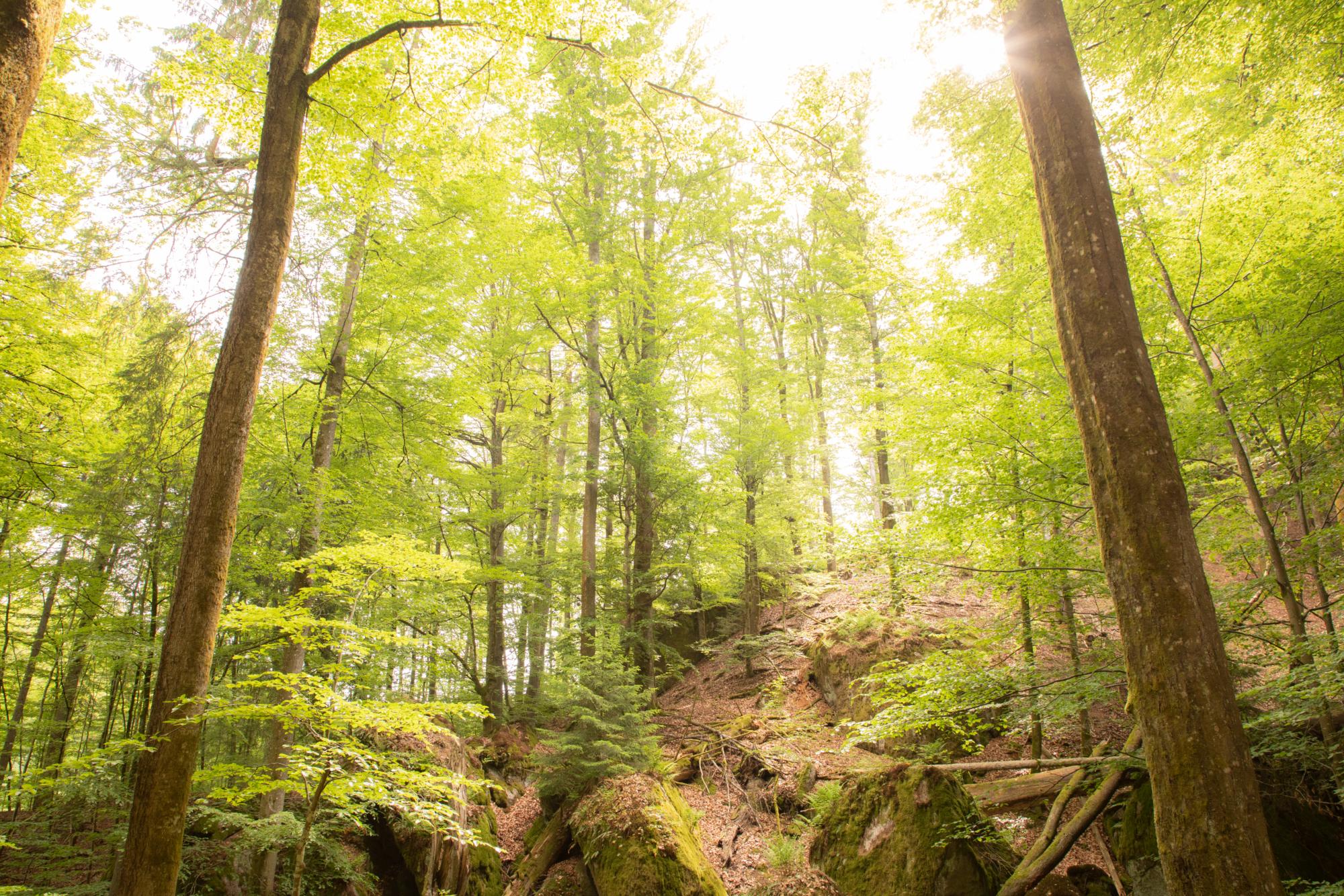 210604 Lebendiger Wald 10