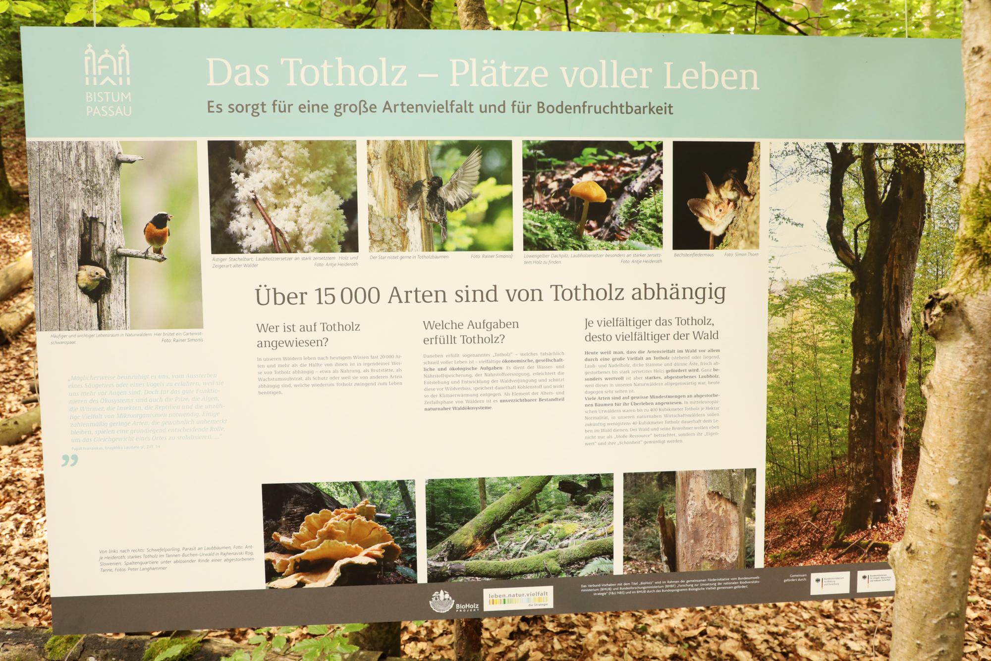 210604 Lebendiger Wald 5