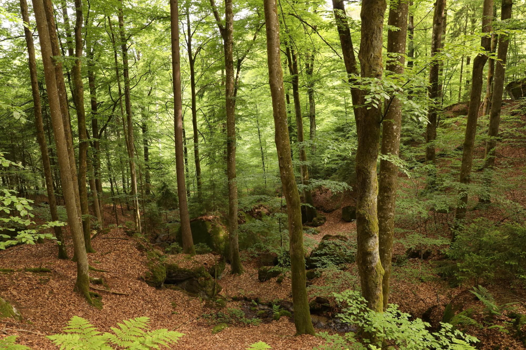 210604 Lebendiger Wald 7
