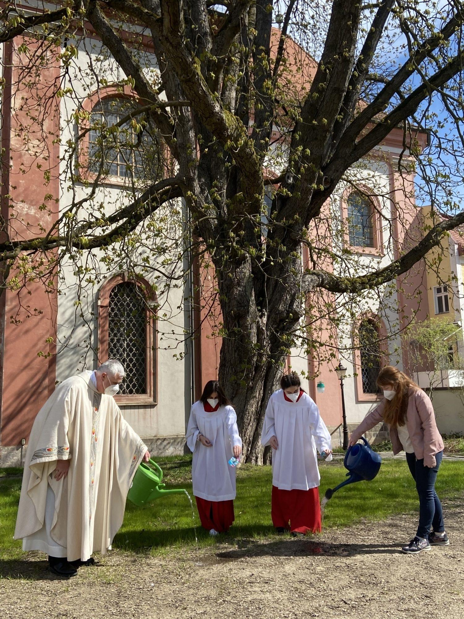 Blumensamensäen Sankt Paul