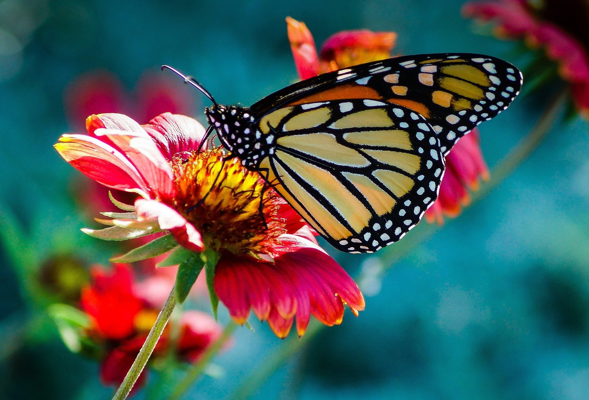 Butterfly 743531 1920 Elina Elena Pixabay