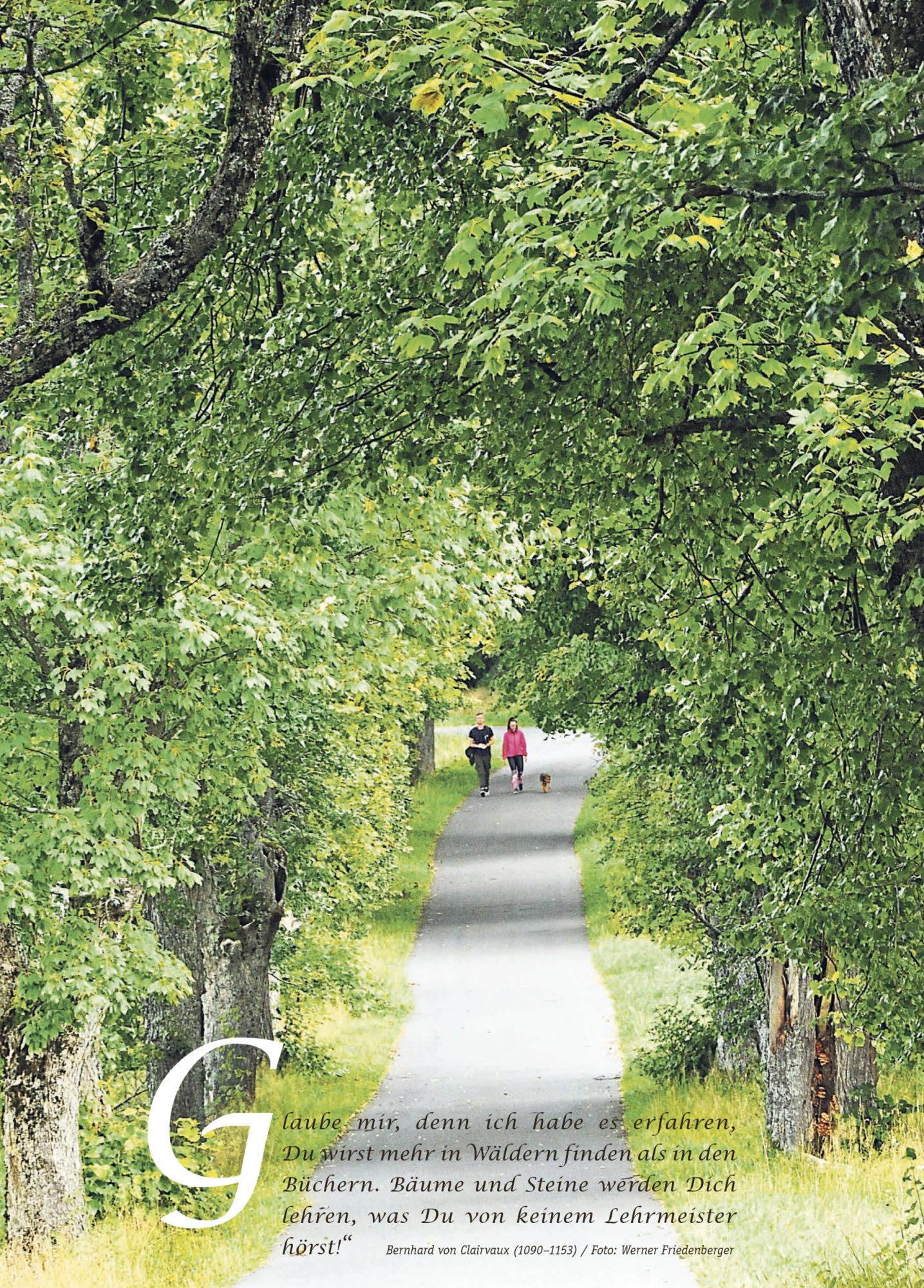 Rücksteite Bild Wald KW39
