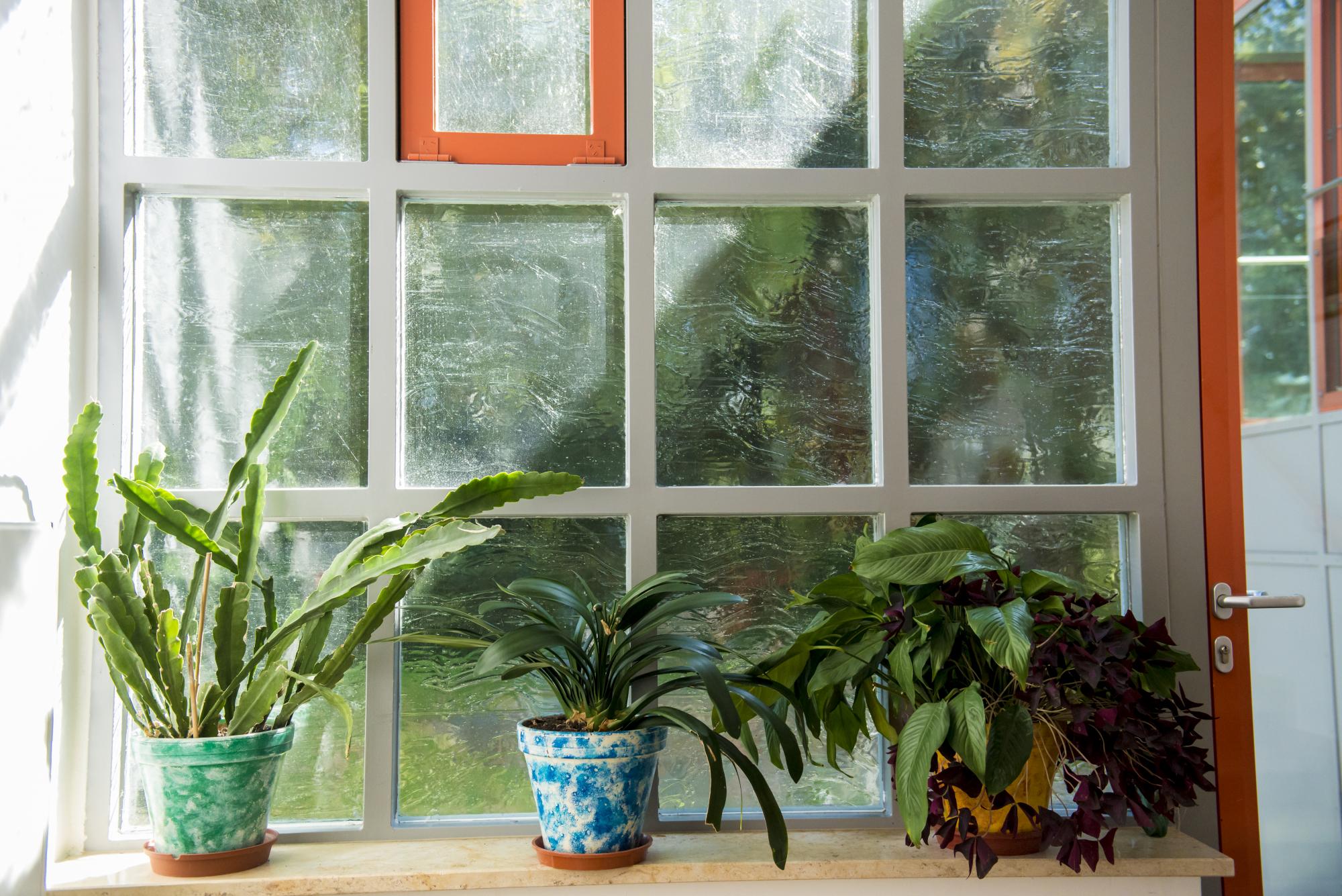 Fenster Haus der Jugend