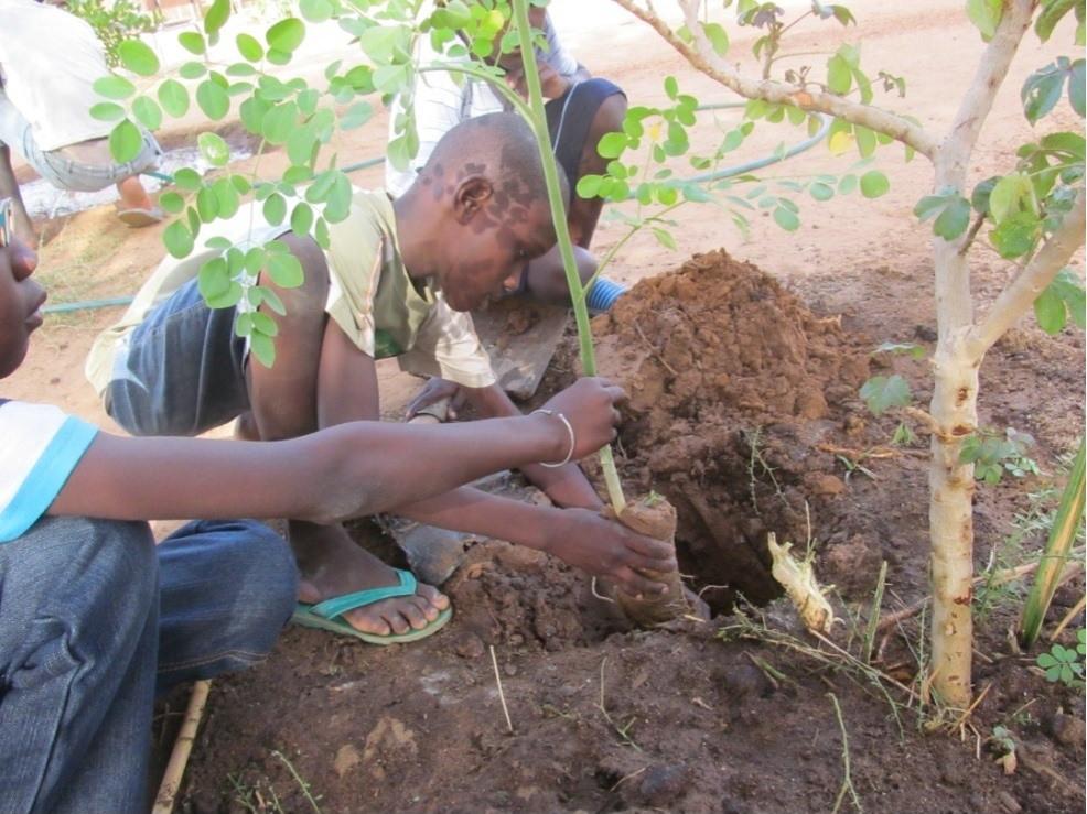 Kinder pflanzen Moringa