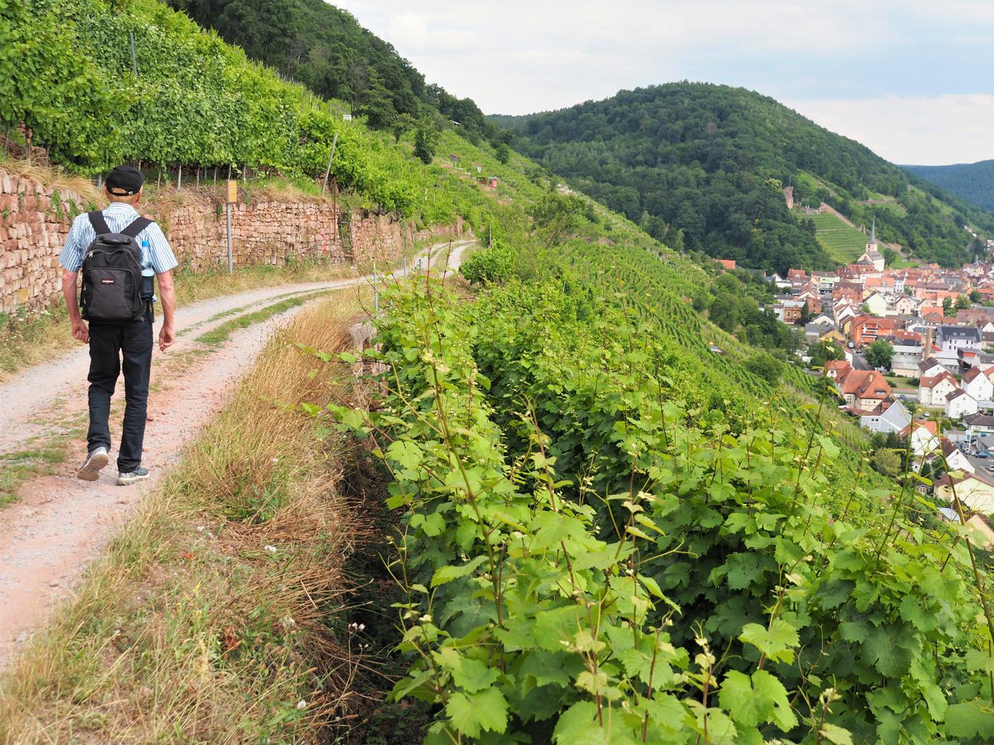 2020 08 21 aoelfb fraenkischer rotweinwanderweg vor klingenberg