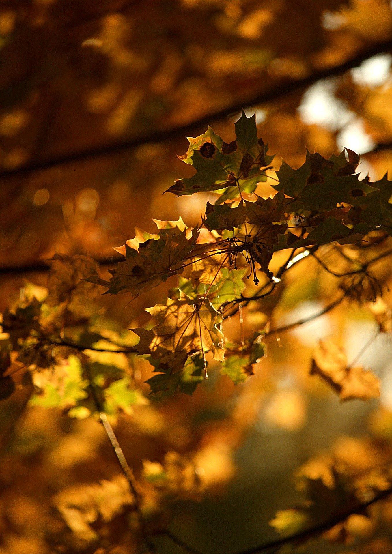 Blätter iira166 Pixabay