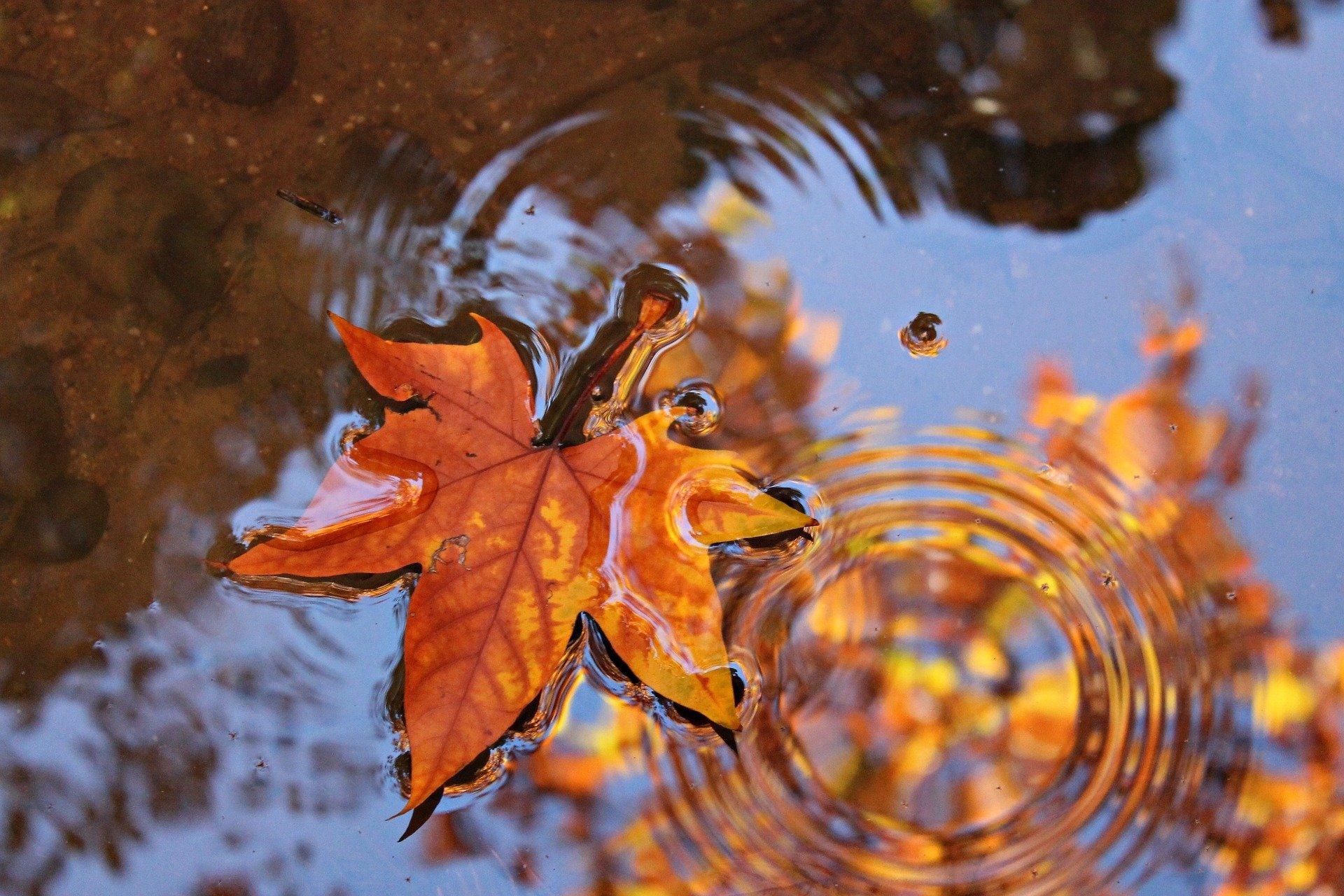 Blatt im Wasser Herbst malubeng Pixabay