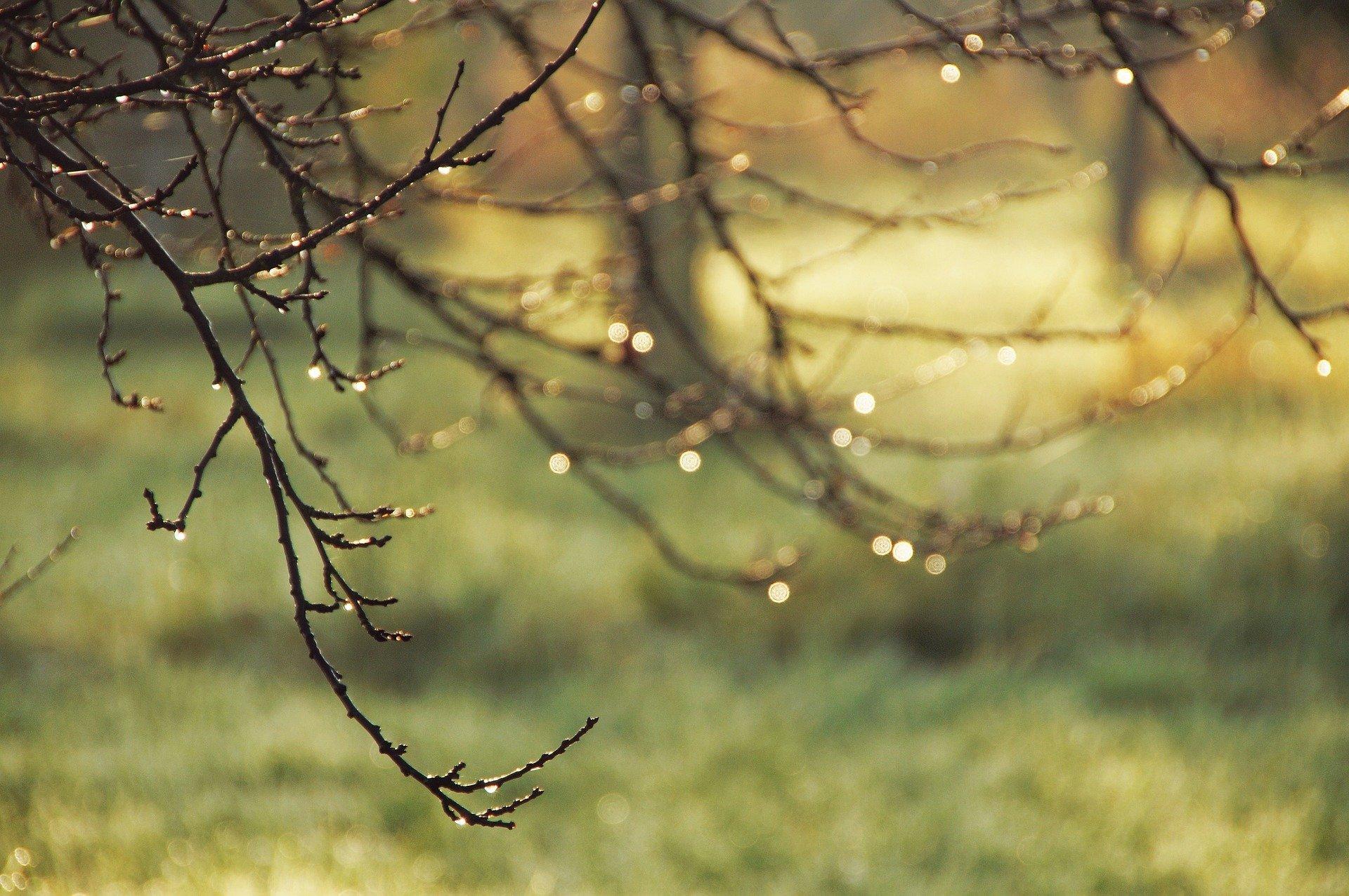 Herbstregen A Sto Ko Pixabay