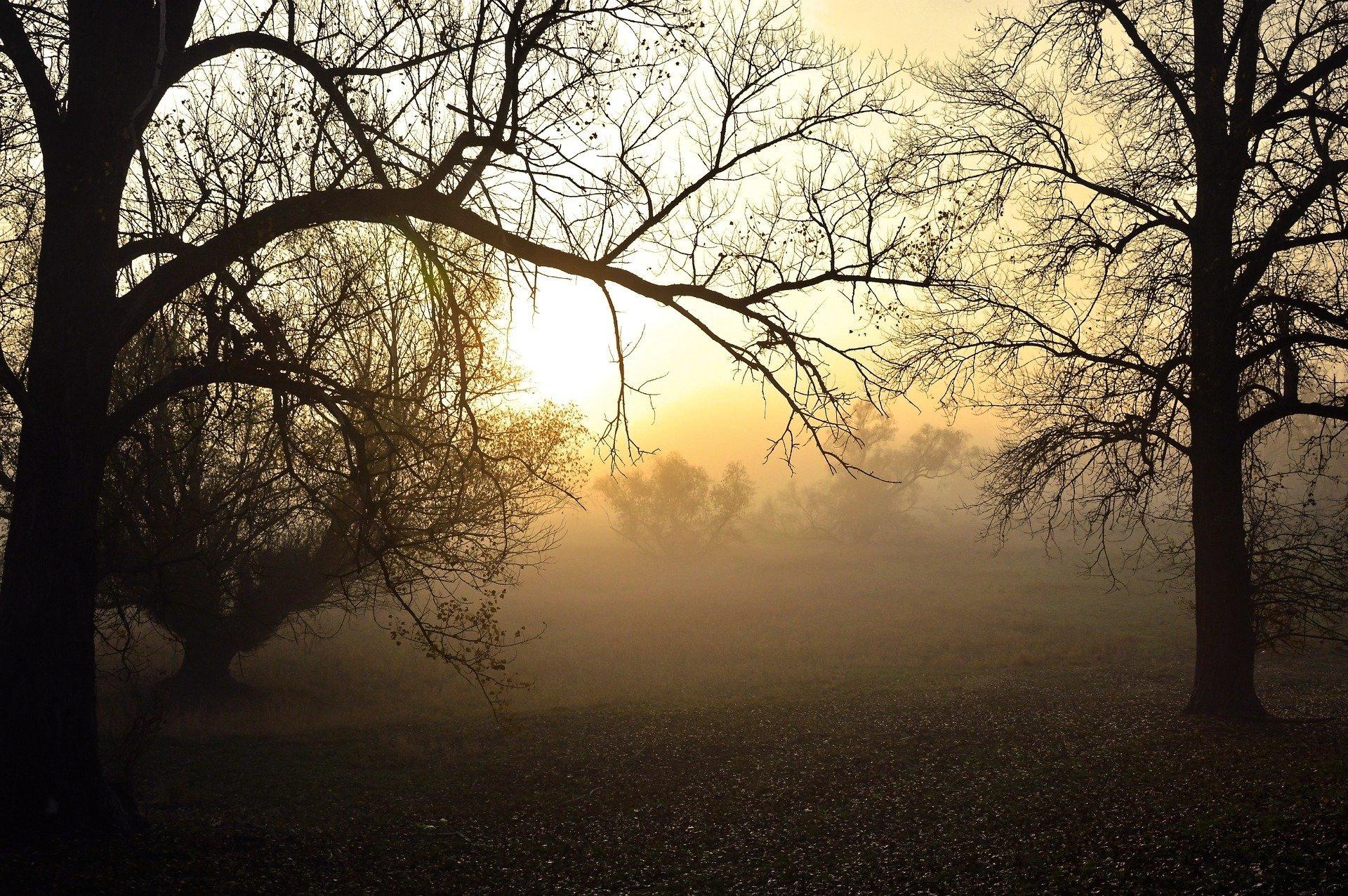 Herbstwetter nebel Peggychoucair Pixabay