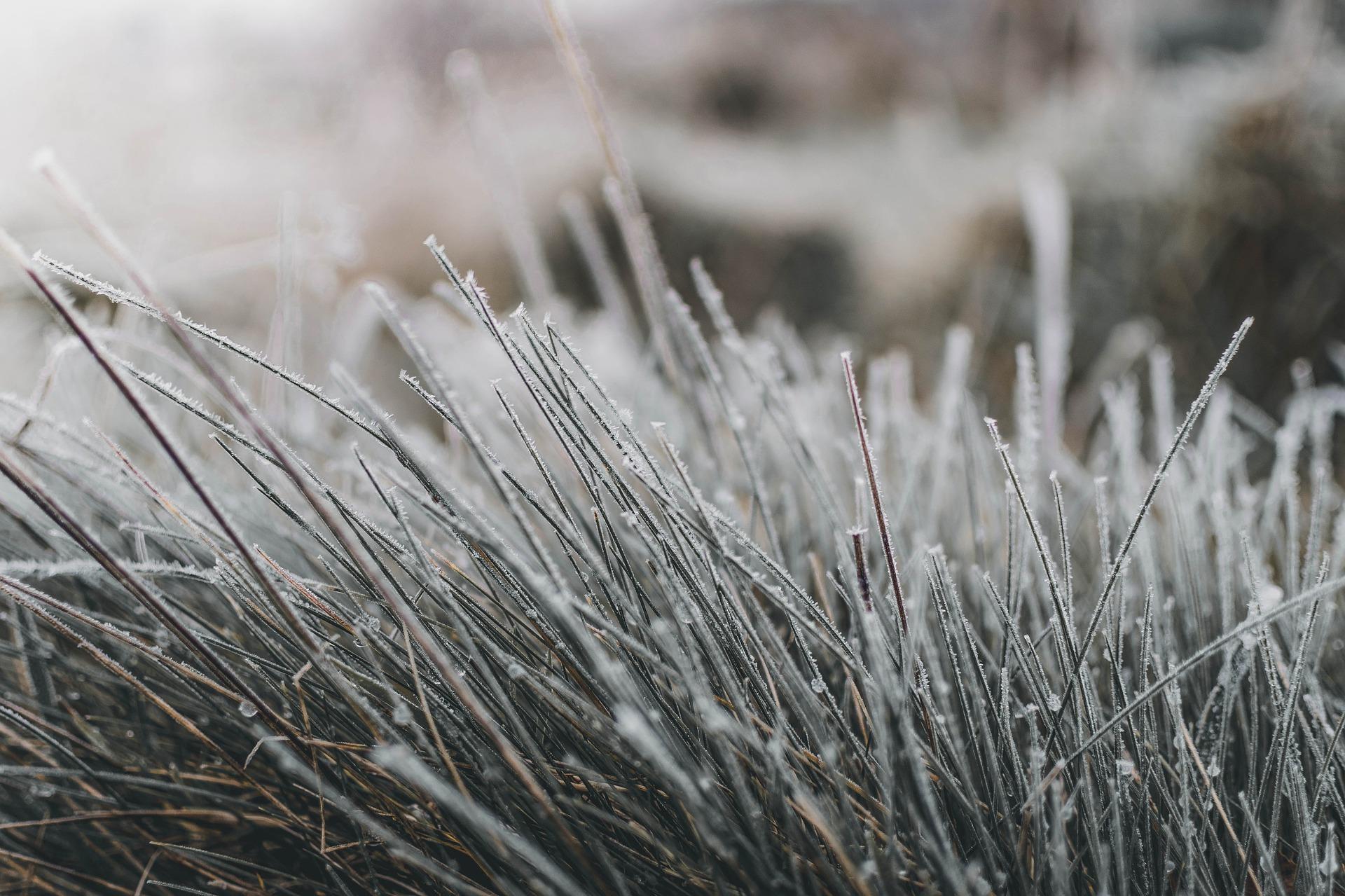 Gras gefrohren Valeria Lu Pixabay