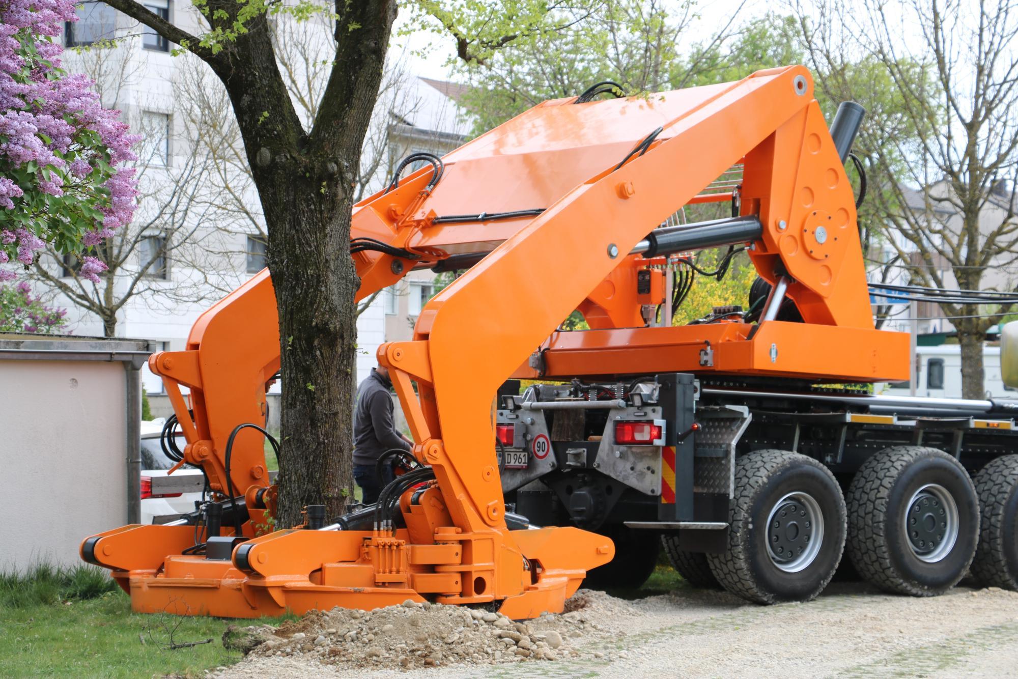Zulf_2019_04_23-Baum-umpflanzen60