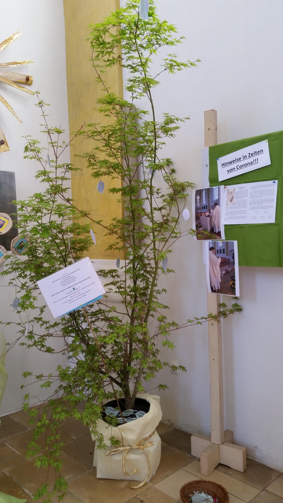 2020 aktuelles lebensbaum bischofsmais 1